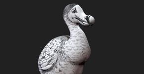Dodo - textured